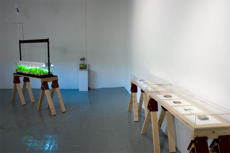 Homegrown installation view